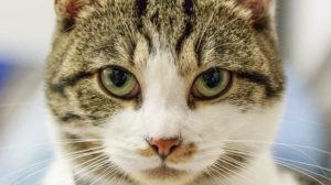Katzen richtig füttern – Die Katzenernährung
